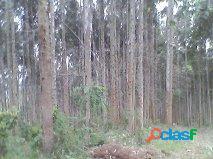 Terreno rural - rural a venda no bairro minhocão - monte castelo, sc - ref.: mc5