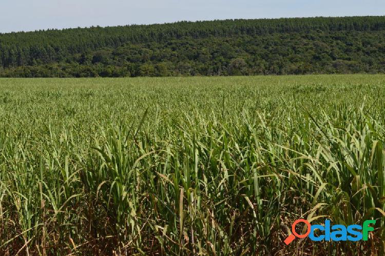 Fazenda com 820 há, excelente para grãos - fazenda a venda no bairro campo - área rural, al - ref.: im16317