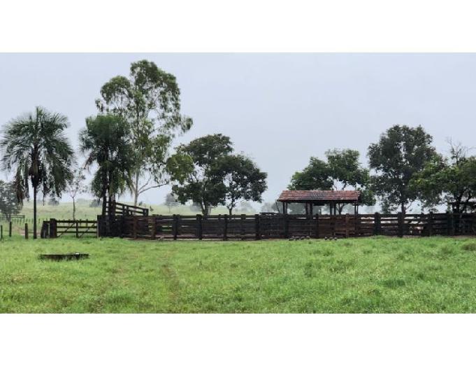 Fazenda 161.5 alqueires (782 hectares) nova xavantina-mt
