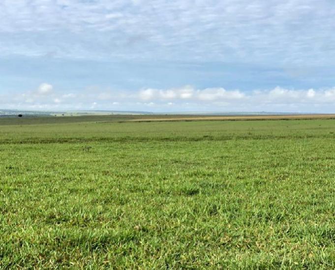 Excelente fazenda com 4.541 hectares na região de camapuã