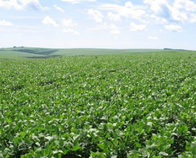 Excelente fazenda com 600 alqueire região de campo mourão