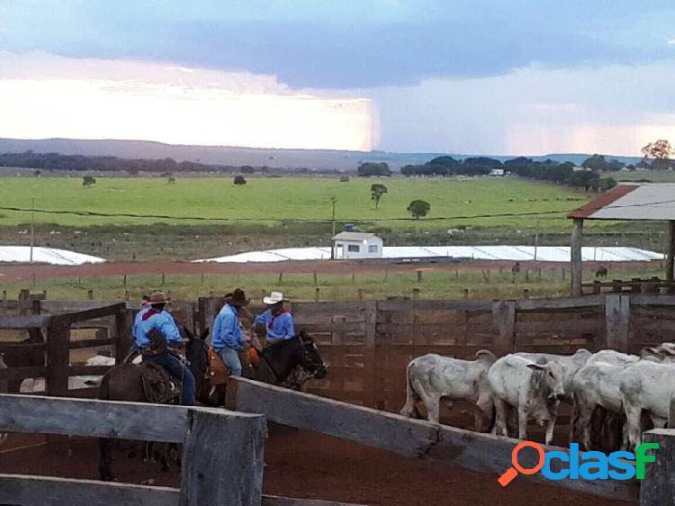 Fazenda em paranatinga -.... por 170 milhões à venda