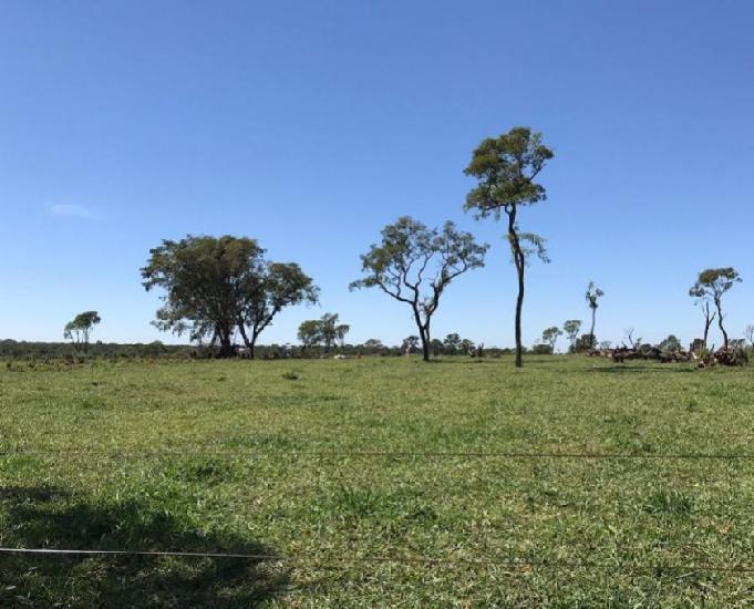 Excelente fazenda com 100 hectares na região de dourados ms