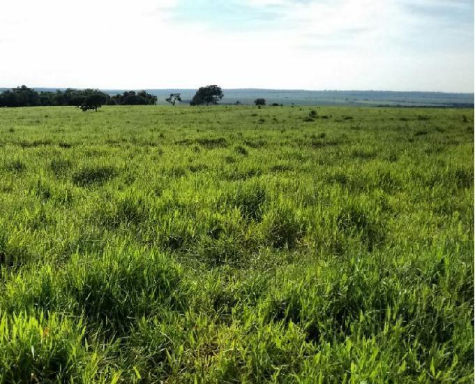 Oportunidade de fazenda com 1.280 hectare em bandeirantes ms