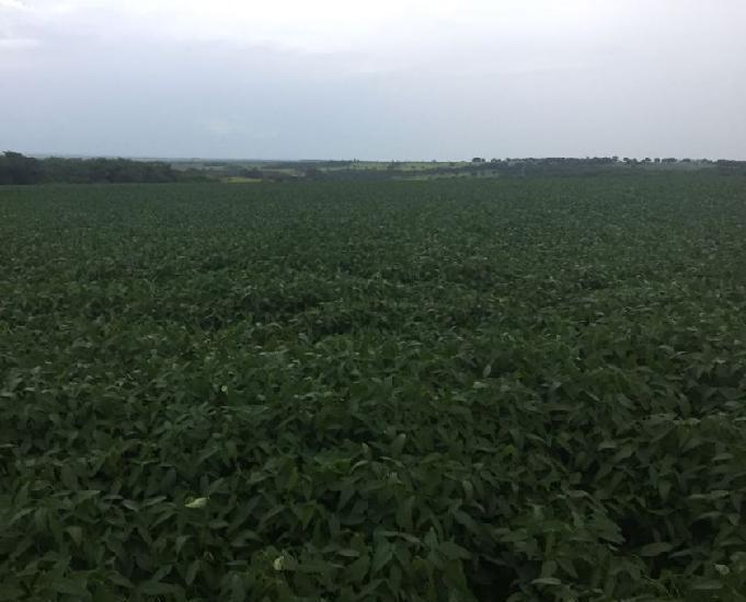 Oportunidade de fazenda com 139 hectares em nova alvorada ms