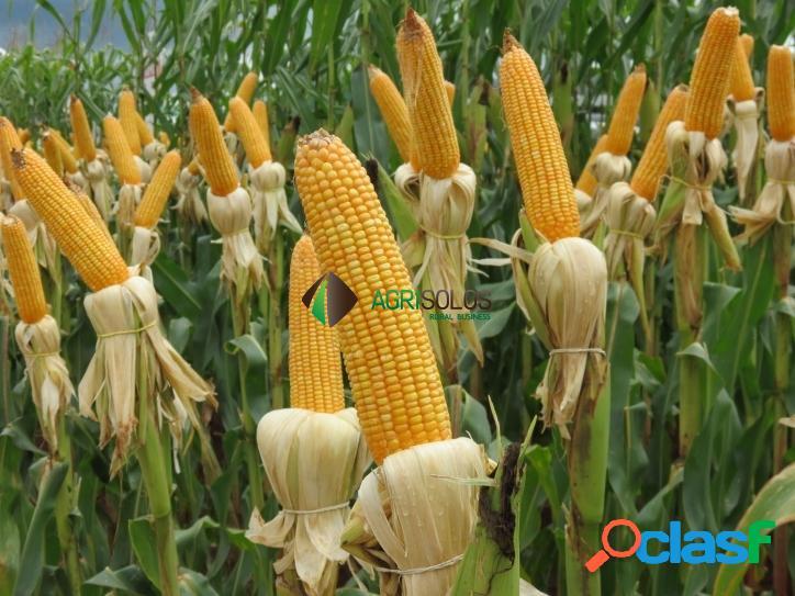 Fazenda 12.500 ha em soja
