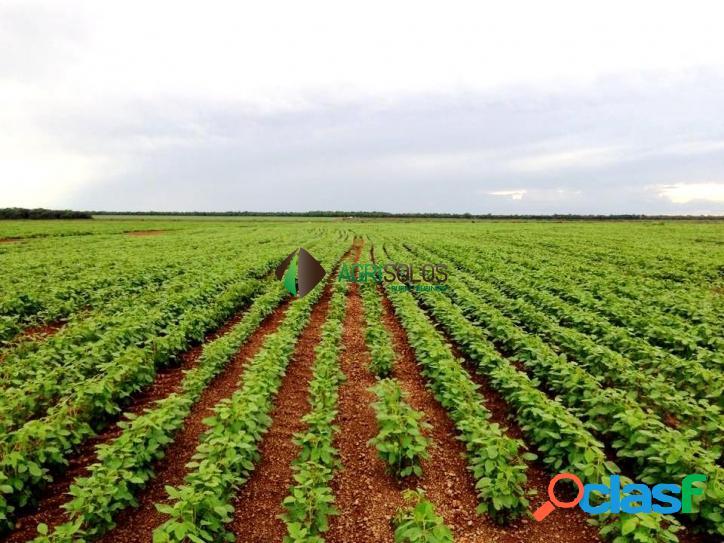 Fazenda 2145 há p/soja vendo ou arrendo