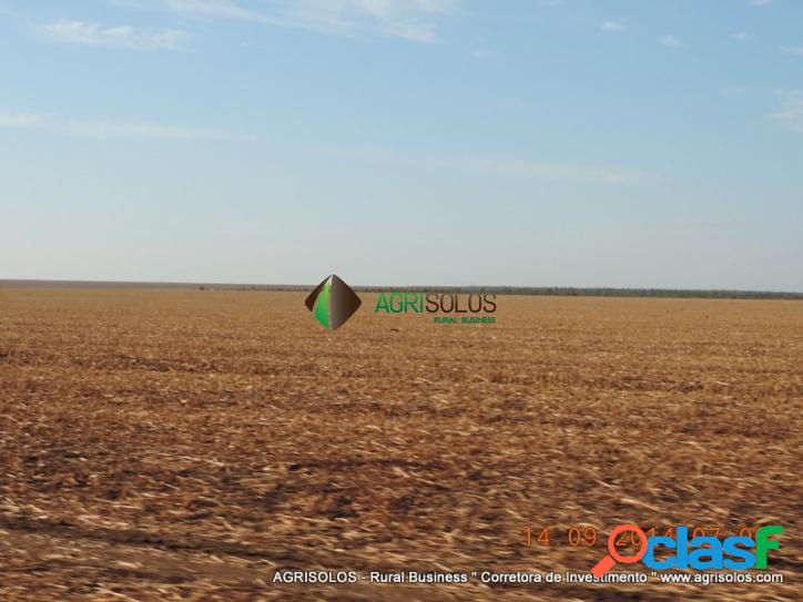 Fazenda 30.000 há c/ soja e algodao