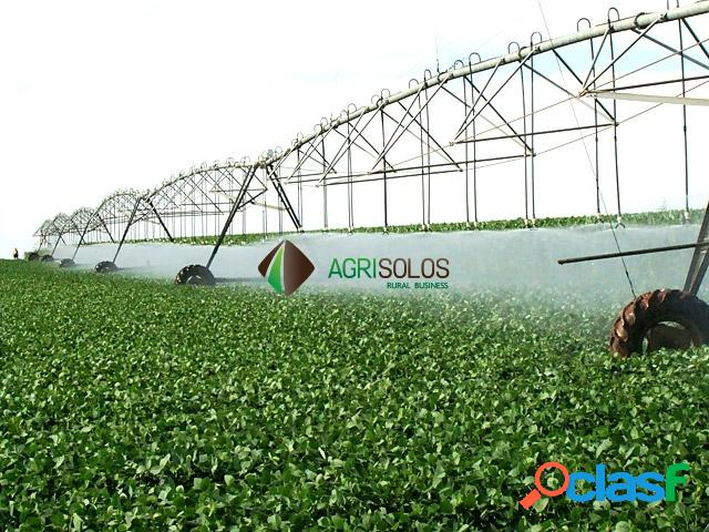 Fazenda 500 ha grãos e irrigação