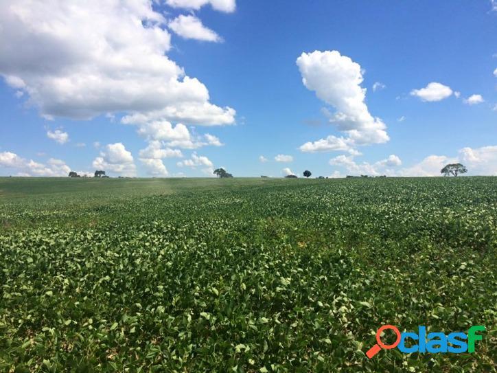 Fazenda 3.310há. c/ soja e pasto