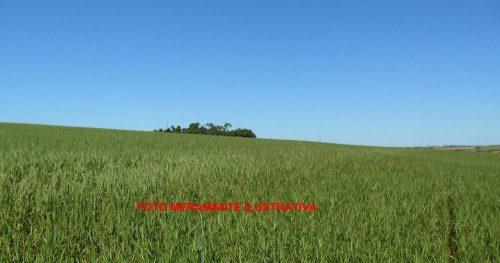 Area para agricultura e pecuária 110h em santa rosa rs