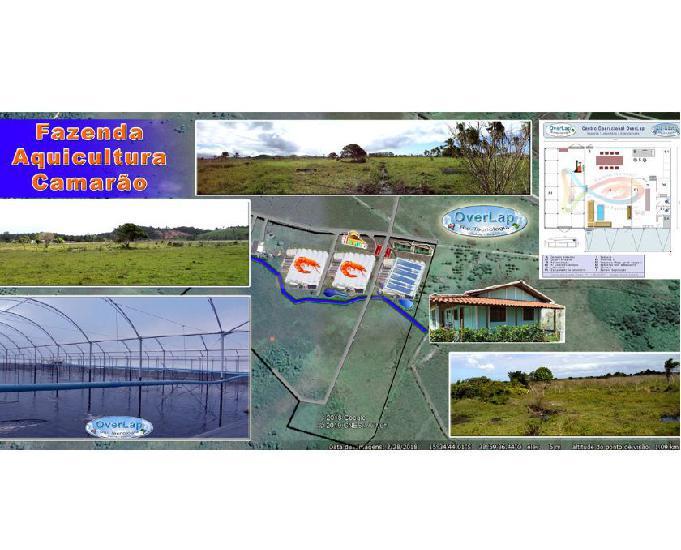 Fazenda aqüicultura, camarão, potencial 520 toneladas pano