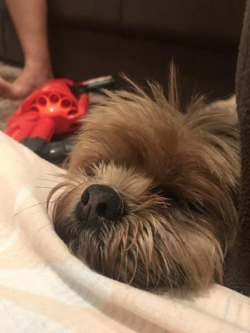 Pet sitter/ cuidadora de cães