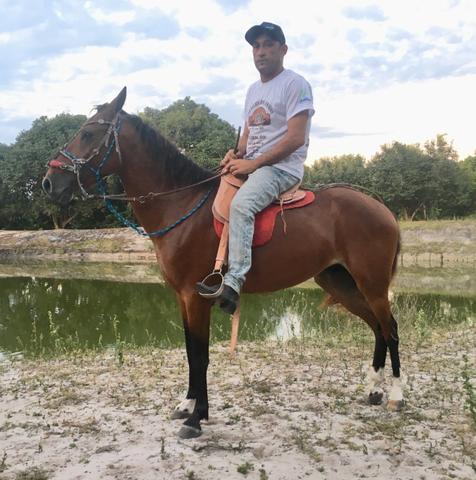 Vendo Cavalo novo, mestiço, castanho, manso