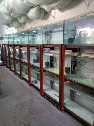 Baterias com aquários para lojas ou criação de peixes