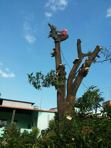 Poda e corte/supressão de árvores. aceitamos cartão de