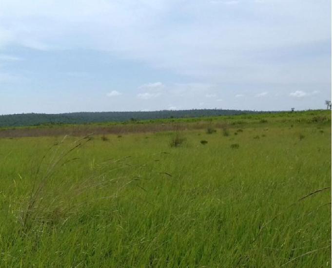 Fazenda pra soja com 10500 hectares