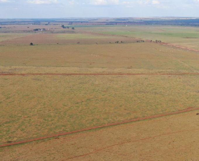 Oportunidade fazenda com 466 hectares região de dourados ms