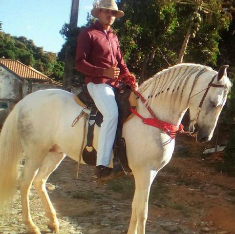 Cavalo manga larga registrado