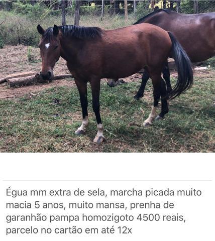 Cavalos eguas e potros diversos