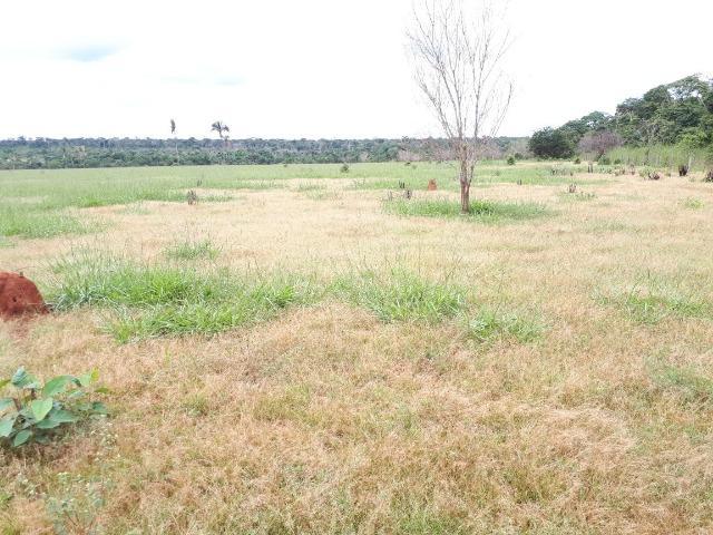Fazenda de 2.998 hectares, com 248 aberto 120 km de matupá