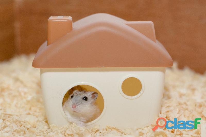Hotelzinho para hamster, gerbil, twister e peixes.