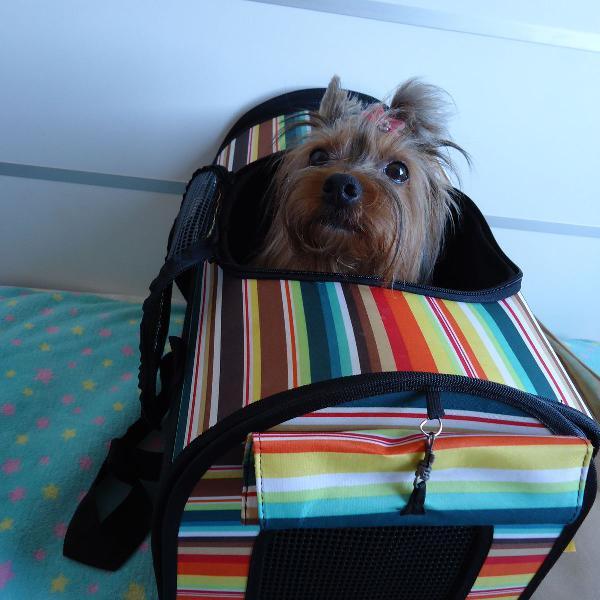 Bolsa de transporte desmontável colorida para pets