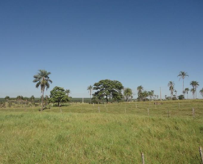 Oportunidade de fazenda com 100 alqueires em brasilândia ms