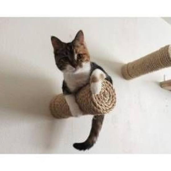 Arranhador brinquedo de parede para seu gato escalar