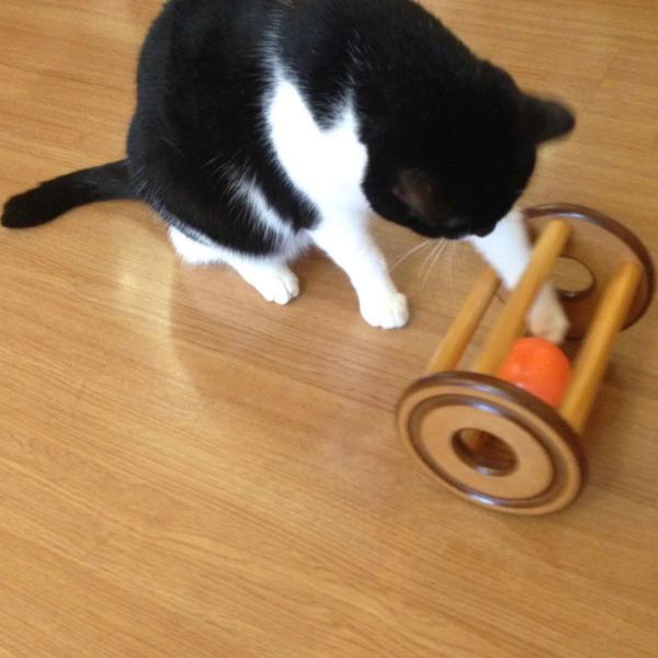 Brinquedo para gatos - carretel interativo