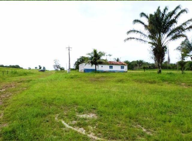 Fazenda na estrada da vigia - pa (2 km de frente - beira da