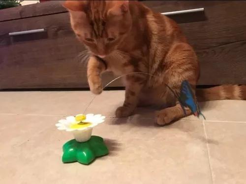 Brinquedo pet gatos, borboleta rotativa eletrônica