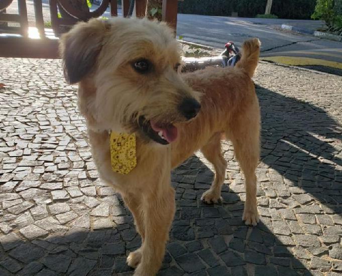 Bolt, um cãozinho doce e bonzinho