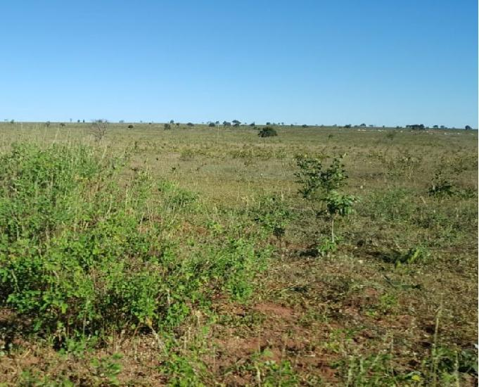 Oportunidade fazenda com 2.026 hectares região de sonora ms
