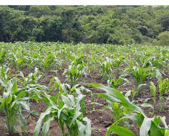 Fazenda 22 alqueires (106.48 hectares) leopoldo bulhões