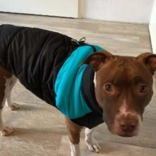 Roupa top pet colete impermeável para cães de grande porte