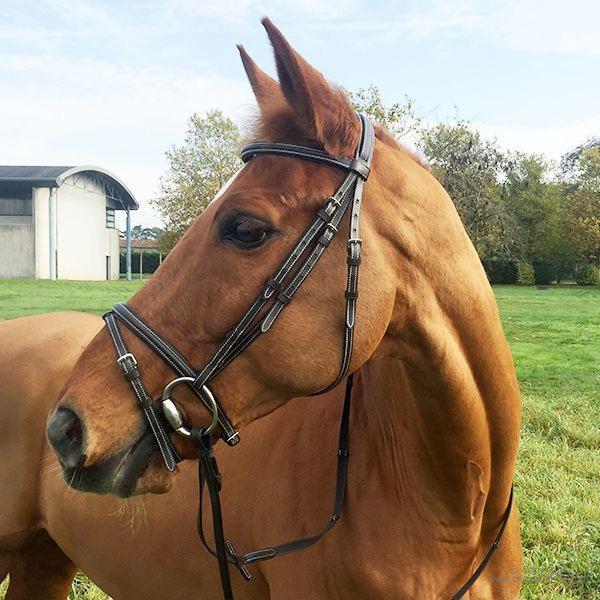 Cabeçada horse & go, inclui rédea com linha de