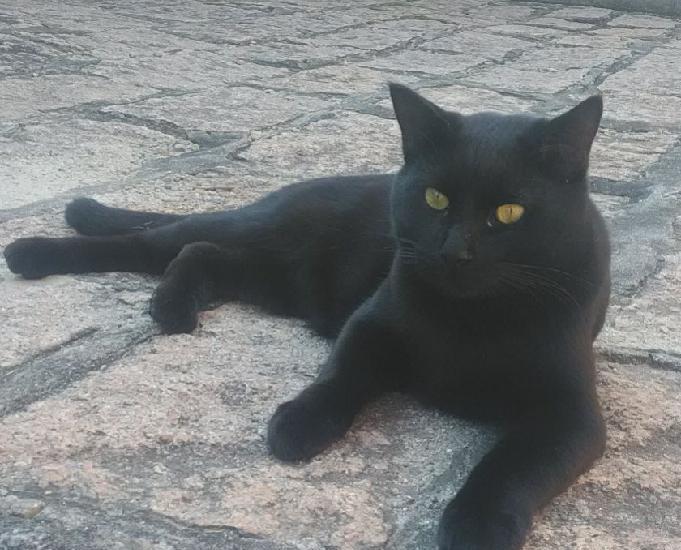 Tim, um gatinho carinhoso, agitado e falante