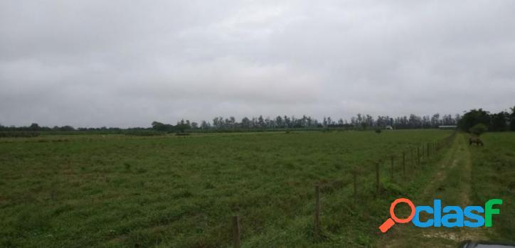 Fazenda para Venda em Registro / SP no bairro Agua Soca