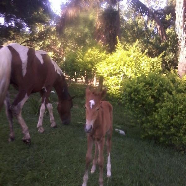 Cavalos, éguas e potras