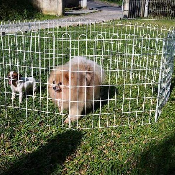 Cercado modular para cachorro