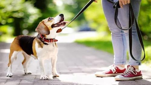 Dog walker pet sitter cuidador de pets com horário agendado