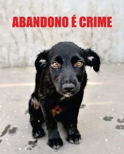 Preciso de doação pra ajudar animais abandondos