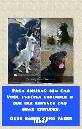 Adestramento de cães e consultoria