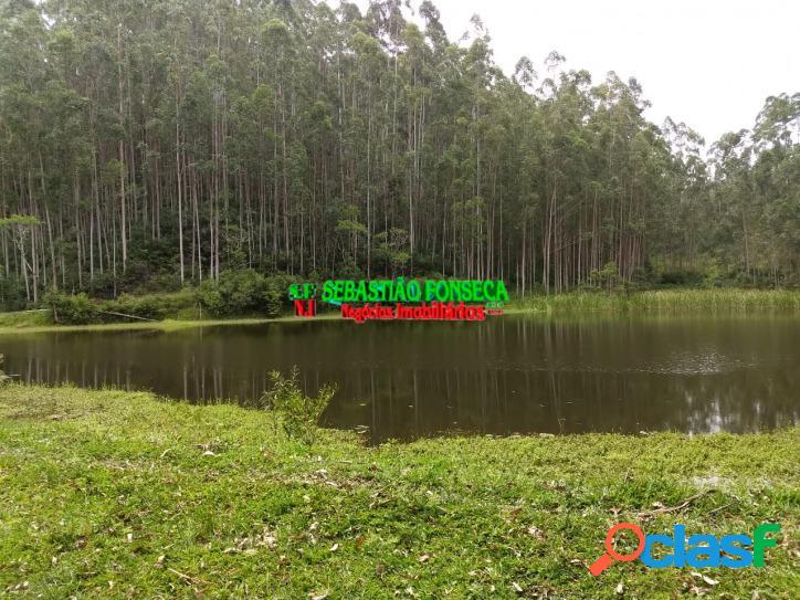 Sítio dos sonhos,lago e eucalipto em são luiz do paraitinga