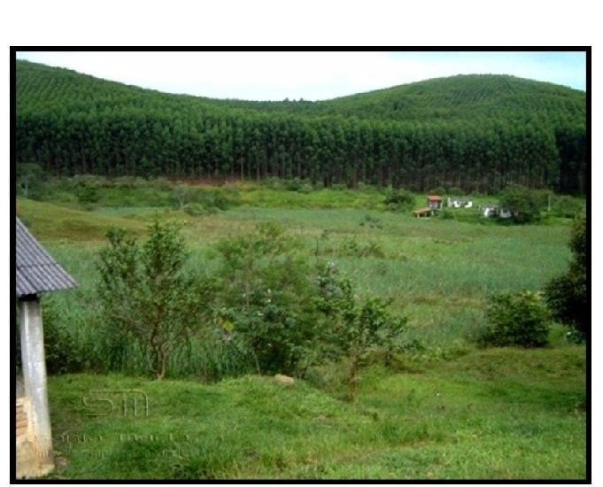Fazenda formada –junto ao asfalto - corte – cruzeiro – sp