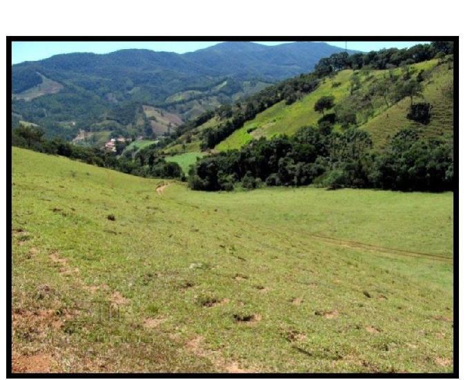 Fazenda gado leitecorteoliveiras – delfim moreira - mg