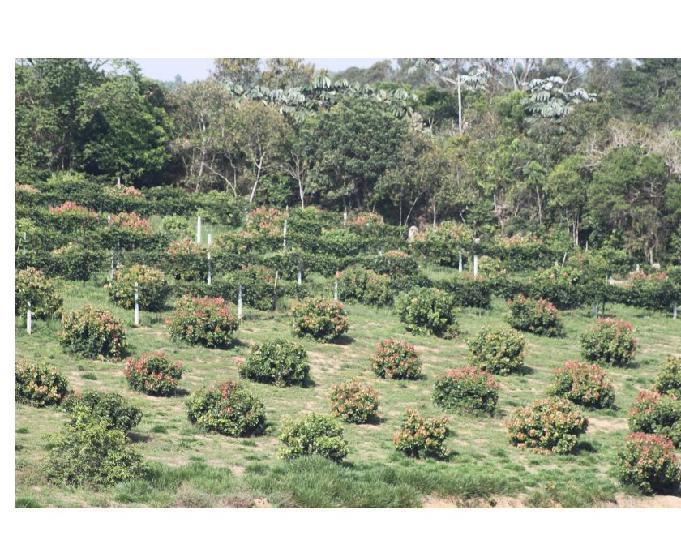 Sitio Orgânico em Biritiba Mirim 5 alqueires.
