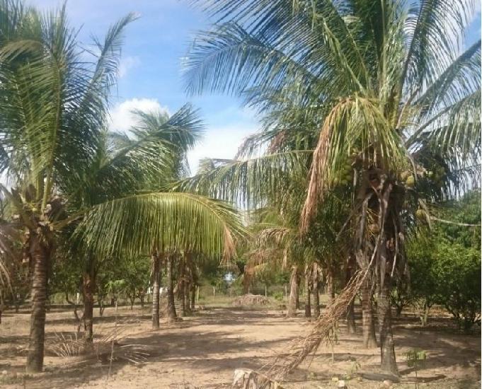 sítio fica a 500 metros da br 101 Próx posto coqueiro