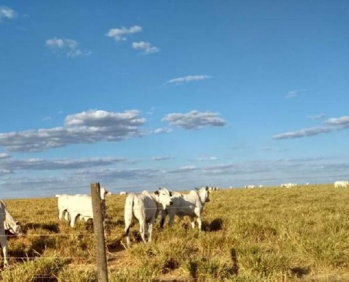 Oportunidade de fazenda com 3.106 hectares em água boa mt